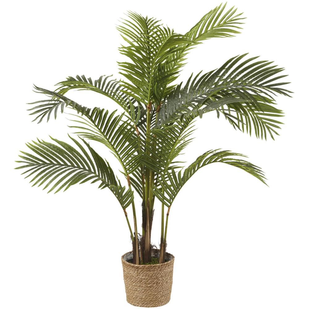 Areca  Majesty verde